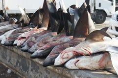 Tubarões fotografia de stock royalty free