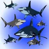 tubarões Fotos de Stock