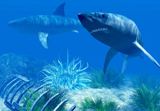 Tubarões Foto de Stock