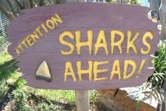 Tubarões adiante! Imagens de Stock