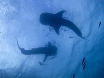 Tubarões de baleia imagens de stock royalty free