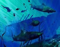 Tubarões e contratorpedeiro da marinha Foto de Stock Royalty Free