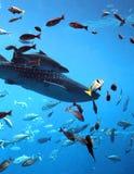Tubarões e peixes Fotografia de Stock