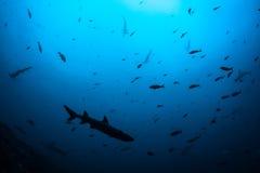 Tubarões e peixes que educam nas águas profundas fotografia de stock royalty free