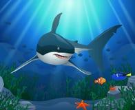Tubarões e recifes de corais no mar imagem de stock royalty free