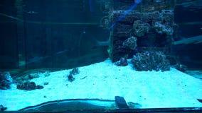 Tubarões em um aquário grande video estoque