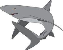 Tubarão Imagem de Stock Royalty Free