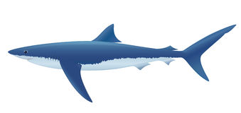 Tubarão azul Imagem de Stock