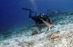Tubarão e mergulhador Fotografia de Stock