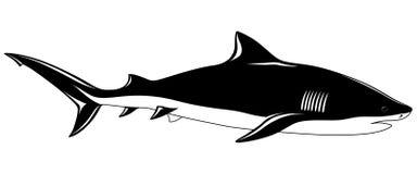 Tubarão, tatuagem Fotografia de Stock