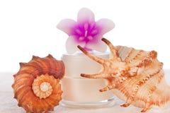 Tube crème décoré des seashells photo stock