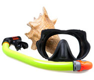 Tube for diving (snorkel), big sea shell and mask Stock Images