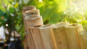 Tube en bambou photo stock