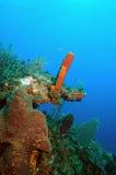 Tube sponge Royalty Free Stock Images