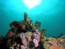Tube Sponge. On a coral mound Stock Photos