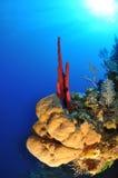 Tube Sponges Royalty Free Stock Photos