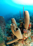 Tube sponges and coral reef Stock Images