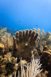 Tube sponges rising from coral reef in the shape of fingers on two hands clasping each other hands and a variety of other marine l Royalty Free Stock Image