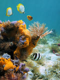 Tube-worm And Orange Sea-sponges Royalty Free Stock Photos