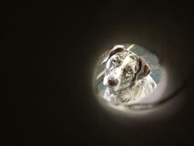 Tubed Dog Stock Photography