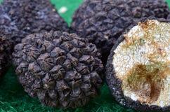 Tuber aestivum. Macro shot of Black truffles or Tuber aestivum, very aromatic and expensive mushroom on green background Stock Photo
