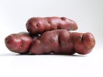 Tubercules de pomme de terre de variété péruvienne indigène images stock