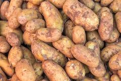 Tubercules des pommes de terre après récolte photographie stock libre de droits