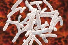 Tuberculose de Mycobacterium das bactérias Fotografia de Stock Royalty Free