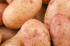 Tuberi di giovani patate crude immagini stock