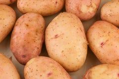 Tuberi di giovani patate crude fotografia stock