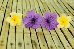 Tuberosa Ruellia και λουλούδι plumeria Στοκ εικόνες με δικαίωμα ελεύθερης χρήσης