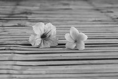 Tuberosa Ruellia και λουλούδι plumeria Στοκ φωτογραφίες με δικαίωμα ελεύθερης χρήσης