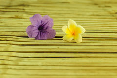 Tuberosa Ruellia και λουλούδι plumeria Στοκ Φωτογραφίες