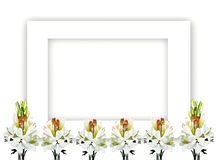 Tuberose Bouquet on Horizontal Frame Royalty Free Stock Image