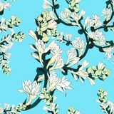 Tuberose - branches. Vector seamless pattern. Medicinal, perfumery and cosmetic plants. Wallpaper. Use printed materials, signs, p. Tuberose - branches Stock Images