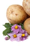 Tubers new potatoes with flowers isolated vertical Stock Images