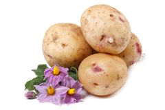 Tubers new potatoes with pink flowers isolated Stock Photo
