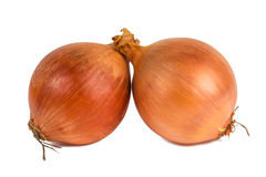 Tubers onions. On a white background Stock Photography