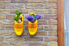 Tubers of tulips in yellow wooden shoes adorn the wall of the house. THE NETHELANDS stock photos