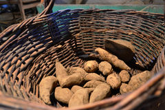 Tubers Stock Photography