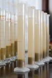 Tubes à essai avec la solution de sol et d'eau Photo stock