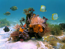 Tubeworms and sponges Stock Image