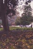 Tubi flessibili di giardino permanenti messi per il sistema dell'irrigazione a goccia del giardino pubblico a Lisbona fotografie stock
