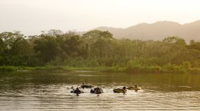 Tubing on the Palomino River in Colombia.  Stock Photo
