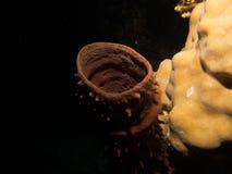 Tubki miękki koralowy callyspongia obrazy royalty free