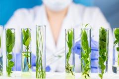 Tubo de ensayo del control del científico con la planta dentro en laboratorio Imágenes de archivo libres de regalías