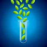 Tubo de ensayo y hoja verde Fotografía de archivo libre de regalías