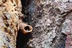 Tubo de la entrada de la colonia sin aguijón de las abejas Foto de archivo libre de regalías