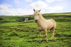 Tubo flessibile selvaggio dell'Islanda Fotografie Stock Libere da Diritti