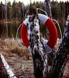 Tubo flotante de Energency en un árbol cerca de la orilla del lago Imagen de archivo libre de regalías